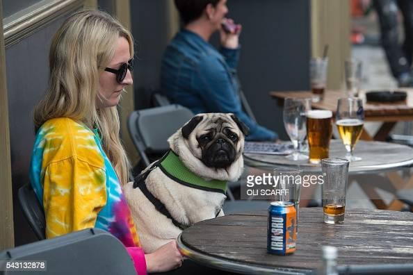 A Pug Dog Sits On A Womans Lap Outside A Bar In Edinburgh Scotland