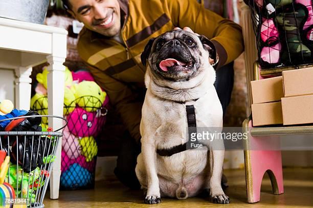 Pug in Pet Shop