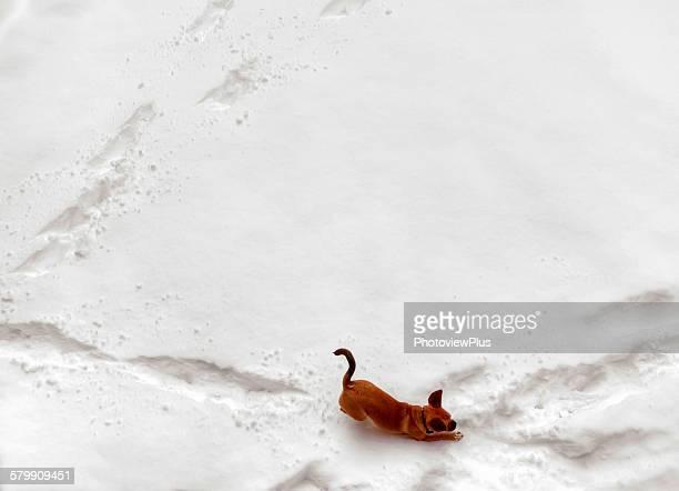 puggle making tracks in the snow - puggle stockfoto's en -beelden