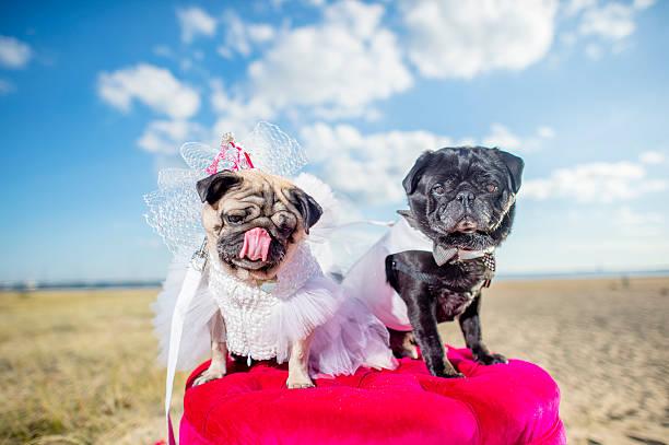 Dog Adoption Melbourne Victoria
