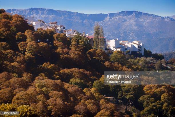 Pujerra, Malaga Province, Spain. Autumn in the chestnut forests of the Valle del Genal in the Serran�a de Ronda. Pujerra is one of several small...