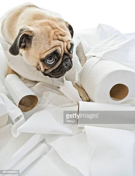 Puk Pukster in Trouble Again with Toilet Paper