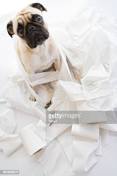 puk pukster is in trouble again with toilet paper - funny toilet paper stock pictures, royalty-free photos & images
