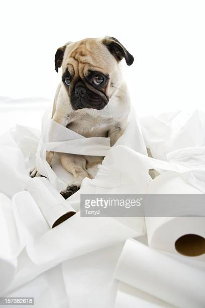 puk pukster - funny toilet paper stock pictures, royalty-free photos & images