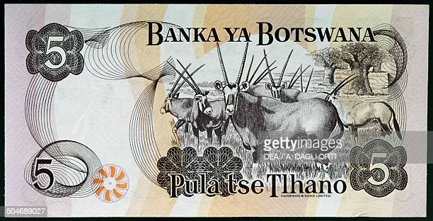 Pula banknote, 1990-1999, reverse depicting Quett Ketumile Joni Masire . Botswana, 20th century.