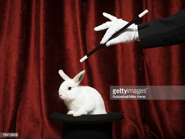 pulling a rabbit out of a hat - zaubertrick stock-fotos und bilder