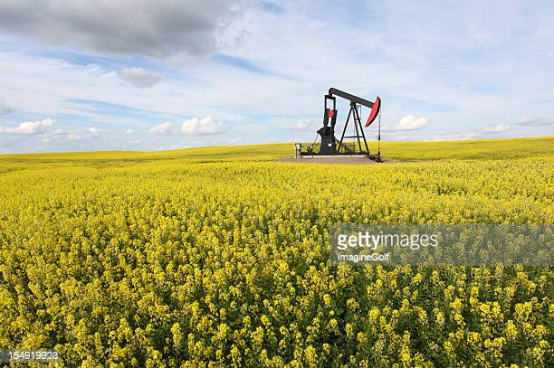 Pumpjack in Canola Field in Alberta Canada