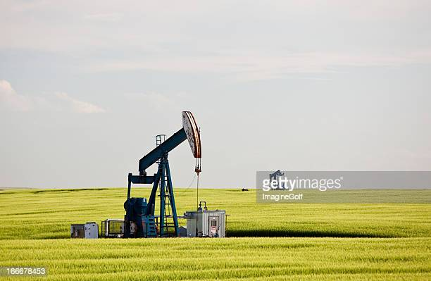 pumpjack in wheat field in oil field - calgary alberta stock pictures, royalty-free photos & images