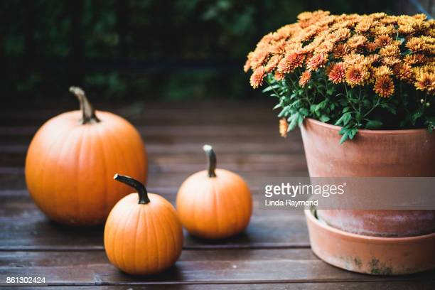 pumpkin and orange flowers on a porch during halloween - chrysanthemum stock pictures, royalty-free photos & images