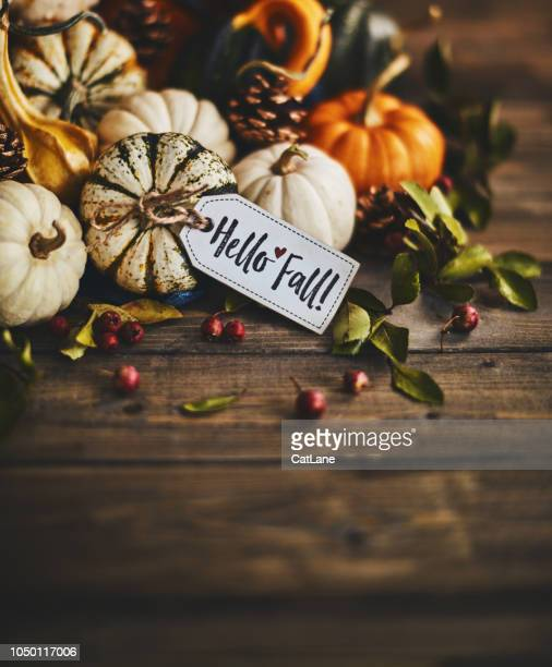 pumpkin assortment still life and hello fall message - thanksgiving cat stock pictures, royalty-free photos & images