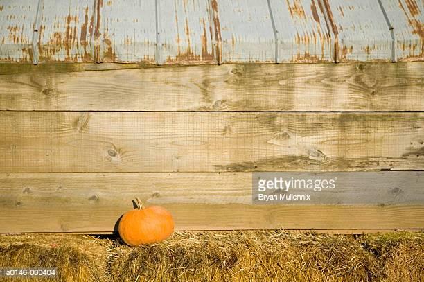 Pumpkin by Barn