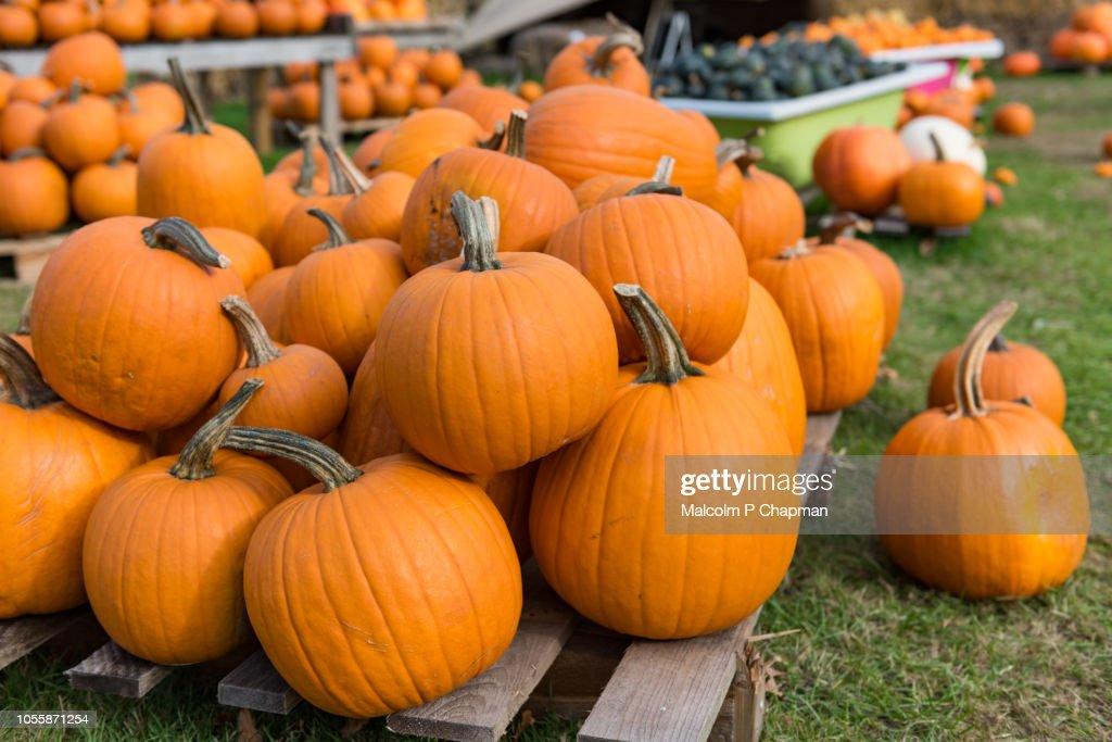 Pumpkin display for Halloween : Stock Photo