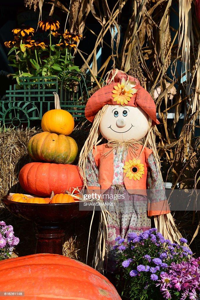 Pumpkin display : Stock Photo