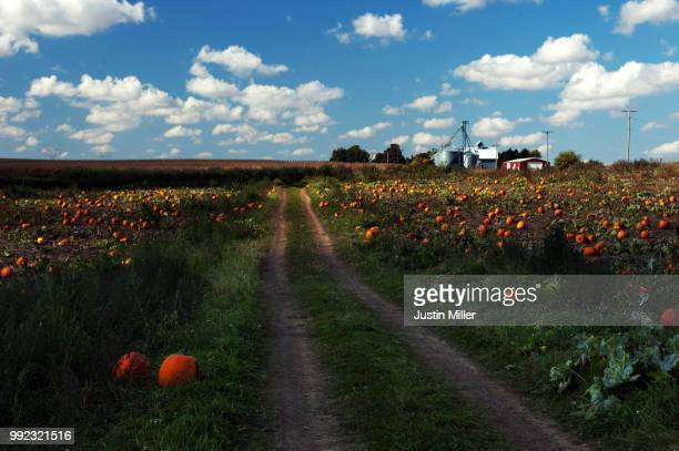 pumpkin farm in waterman, illinois - justin waterman stock pictures, royalty-free photos & images