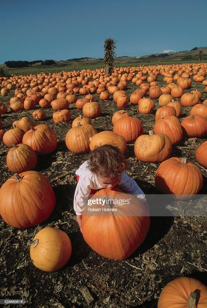 Half Moon Bay Pumpkin Festival 2020.Pumpkin Festival At Half Moon Bay High Res Stock Photo