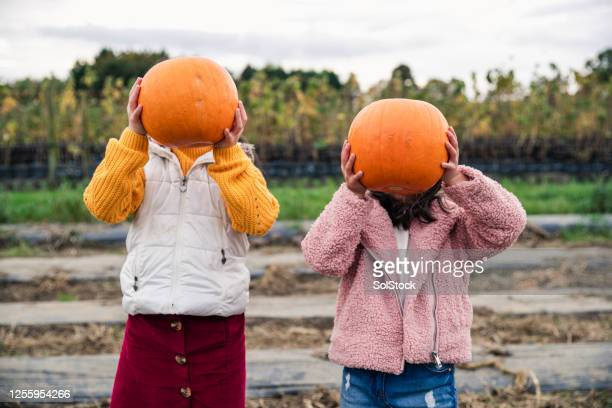 pumpkin heads! - obscured face stock pictures, royalty-free photos & images