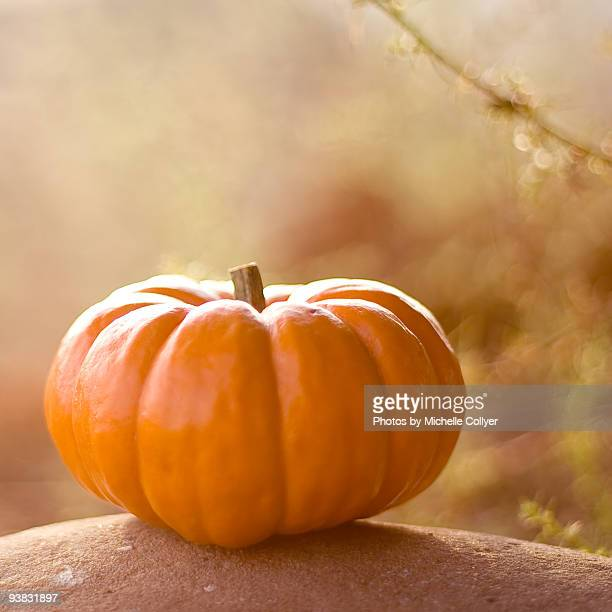 Pumpkin on rock
