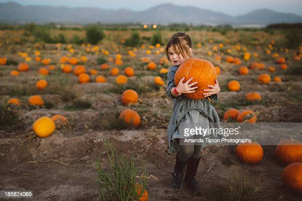 pumpkin patch - pumpkin patch stock photos and pictures