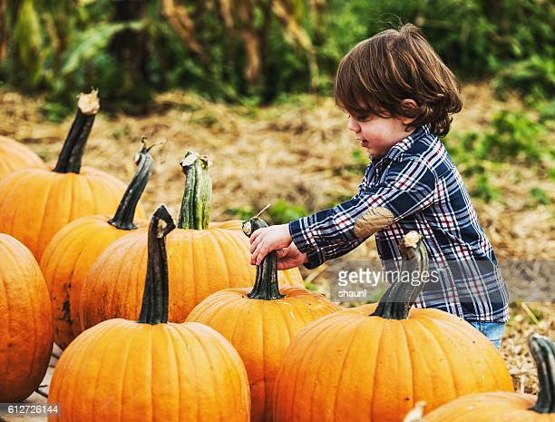 Pumpkin Picking Boy