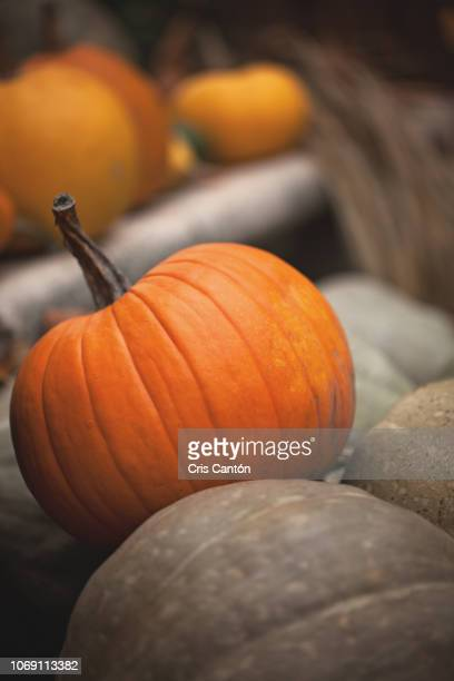 pumpkin - cris cantón photography stock pictures, royalty-free photos & images