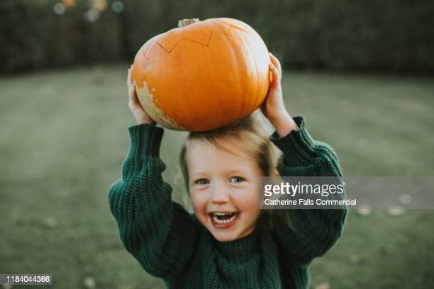 pumpkin - autumn stock pictures, royalty-free photos & images