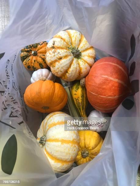 pumpkin season - heidi coppock beard - fotografias e filmes do acervo