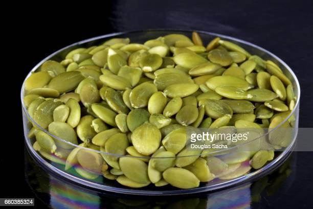 Pumpkin Seeds of Pepita (Cucurbita pepo)