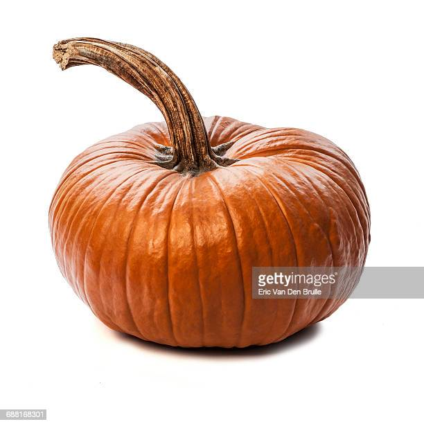 pumpkin silhouette - eric van den brulle stock pictures, royalty-free photos & images