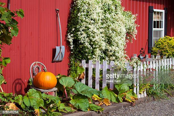 Pumpkin Sits Outside Red Barn And White Picket Fence; Everson Washington United States Of America