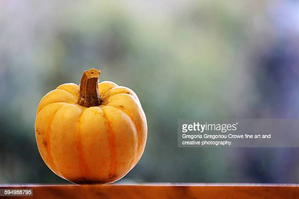 pumpkin squashe - gregoria gregoriou crowe fine art and creative photography. stockfoto's en -beelden