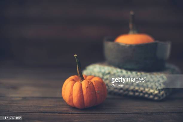 pumpkin still life with bowl and blanket for thanksgiving - thanksgiving cat stock pictures, royalty-free photos & images