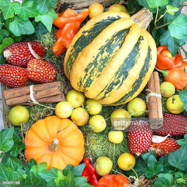 Pumpkins and autumn fruits