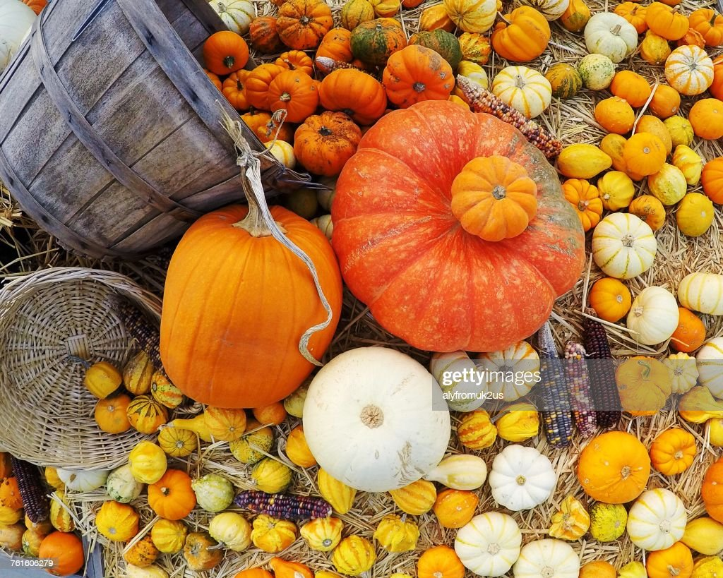 Pumpkins and corn on the cob, America, USA : Stock Photo