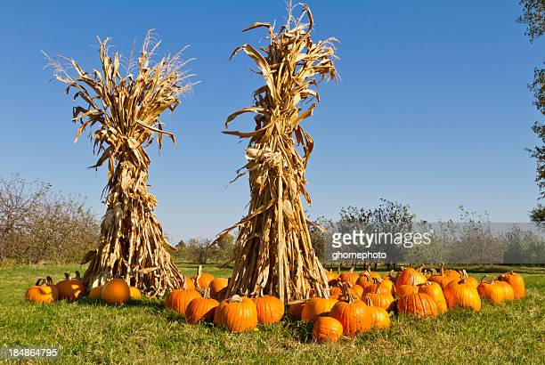 Pumpkins and corn stalks at farmers market