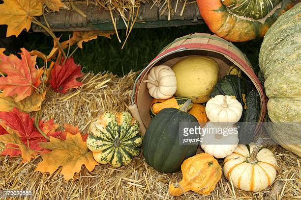 Pumpkins and gourds spilling out of a barrel in autumn