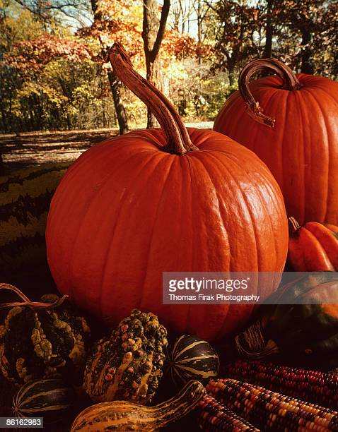 pumpkins and squash -  firak stock pictures, royalty-free photos & images