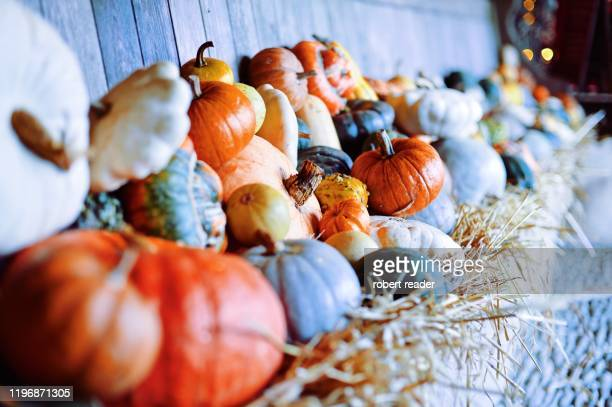 pumpkins and squashes - harvest festival stock pictures, royalty-free photos & images