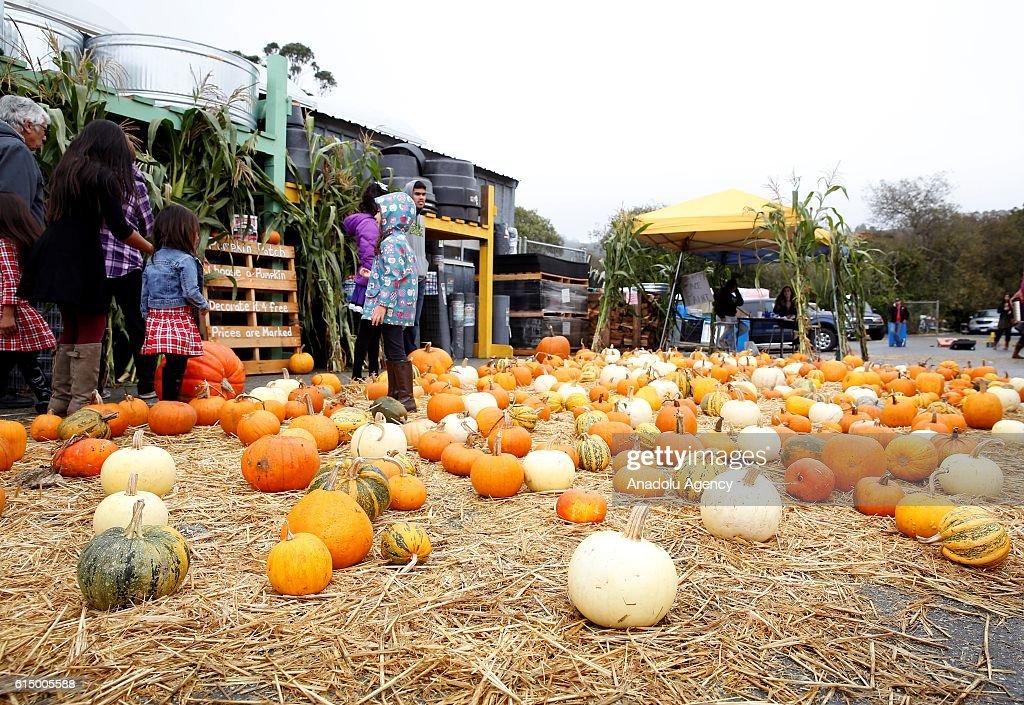 Half Moon Bay Pumpkin Festival 2020.Pumpkins Are Seen During The 46th Half Moon Bay Pumpkin