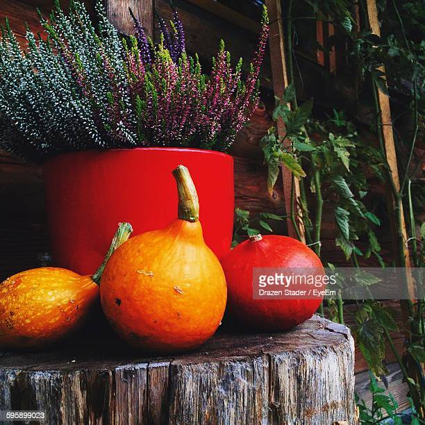 pumpkins by flowers on log in back yard - drazen stock pictures, royalty-free photos & images