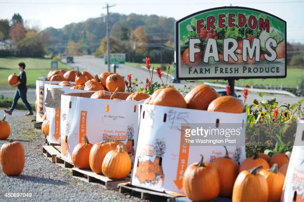 Pumpkins for sale at Freedom Farms Market in Butler PA on October 15 2013 The Kings are stars of the reality program Farm Kings on the Great American...