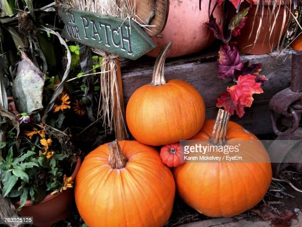 pumpkins for sale at market stall - karen price stock pictures, royalty-free photos & images