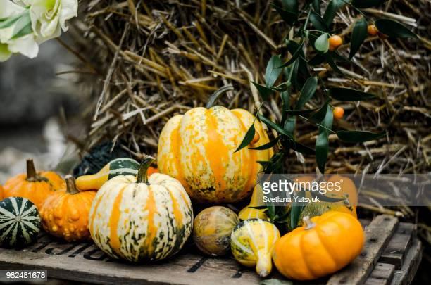 pumpkin's harvest