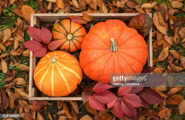pumpkins in wooden crate - fall harvest stock pictures, royalty-free photos & images