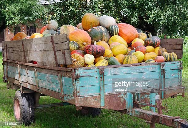 Pumpkins loaded onto a trailer