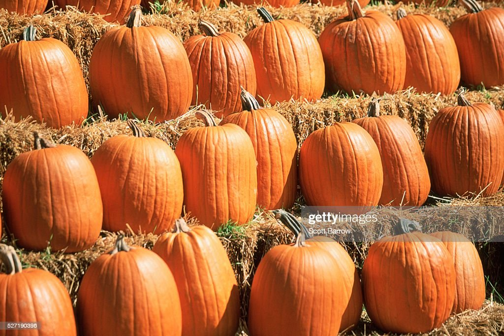 Pumpkins on hay bales : Stock Photo