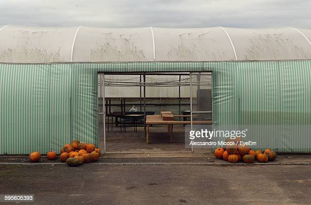 pumpkins outside warehouse - alessandro miccoli stock pictures, royalty-free photos & images