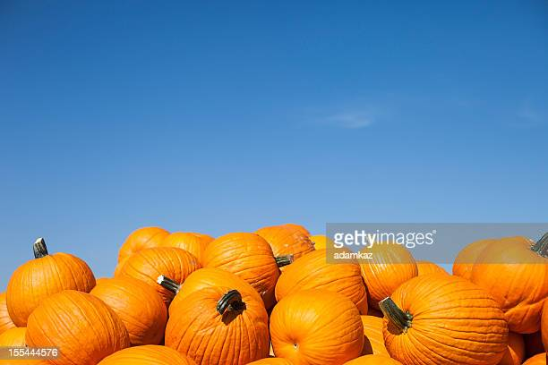 pumpkins - pumpkin stock pictures, royalty-free photos & images