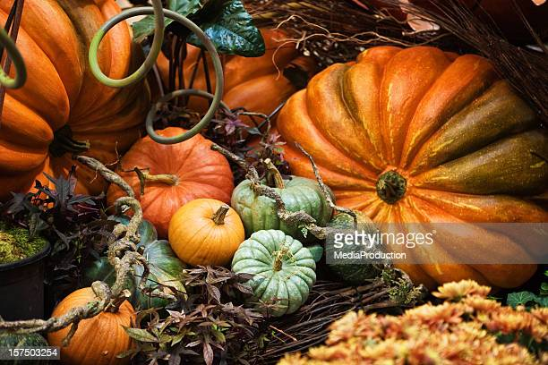 pumpkins - still life stock pictures, royalty-free photos & images