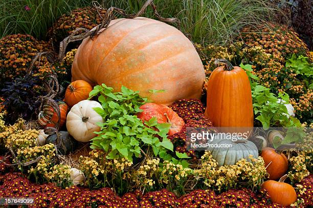 pumpkins - harvest festival stock pictures, royalty-free photos & images