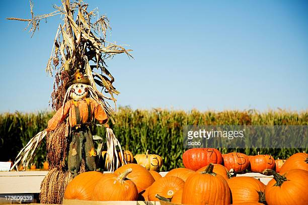 pumpkins - scarecrow agricultural equipment stock photos and pictures